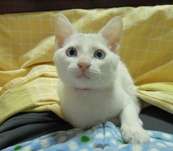 20131115しいお膝猫