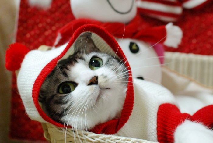 ミリンあったかセーター