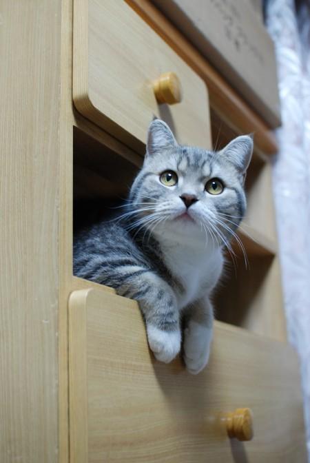 タンス猫1