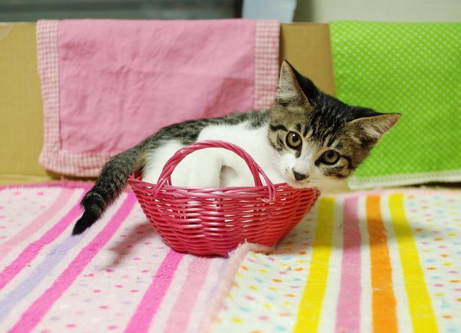 20131111くうかご猫