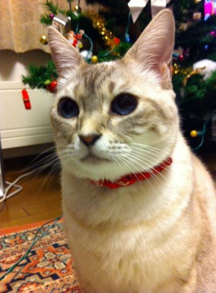 パールちゃんのクリスマス