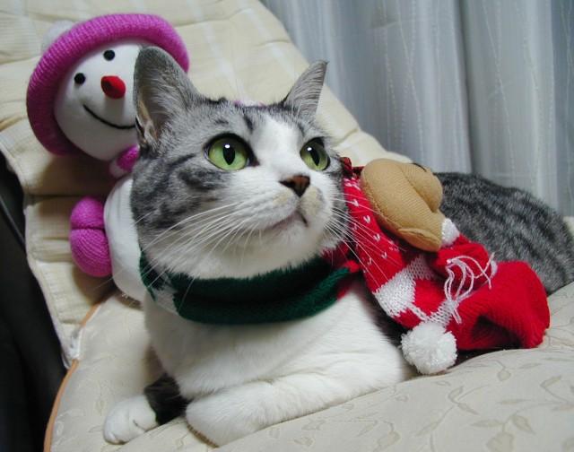 2006クリスマス1