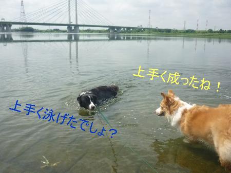 彩湖で泳ぐ4