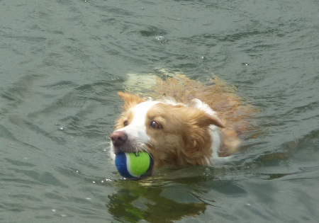 彩湖で泳ぐ
