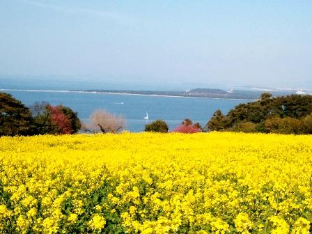2011-03-27能古の島