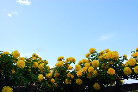 garden - 01-1