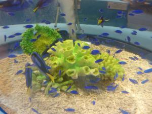 青い海の水族館8