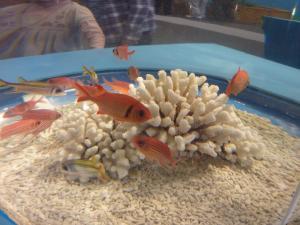 青い海の水族館5