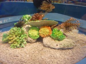 青い海の水族館3