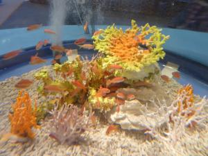 青い海の水族館9