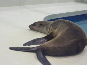 青い海の水族館10