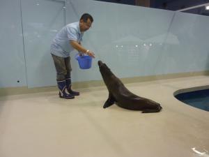 青い海の水族館17