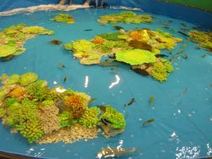 青い海の水族館23