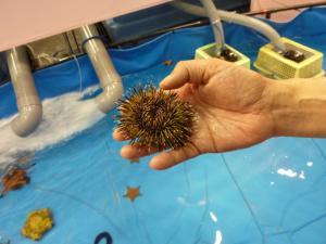 青い海の水族館32