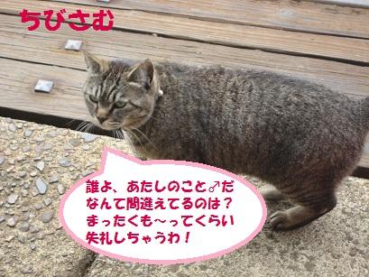 IMG_0072_20110521230706.jpg