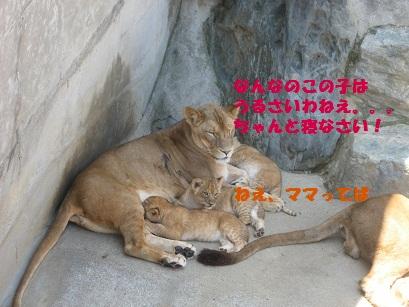 IMG_0238_20110516224412.jpg