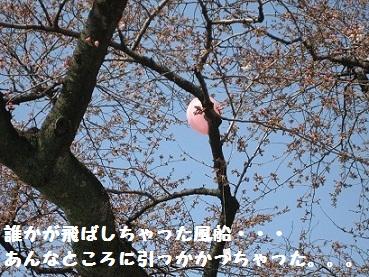 IMG_0609_20100404210147.jpg