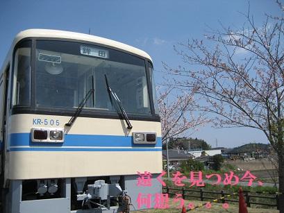 IMG_0956_20111014215918.jpg