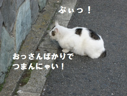 IMG_2772.jpg