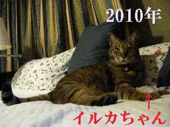 2010-7-2-7.jpg