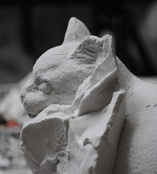 石膏取り割り出し途中のネコ 撮影 松田光司