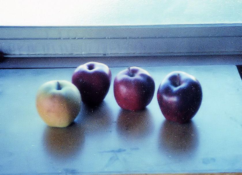 本物のリンゴと紙粘土のリンゴ 撮影 松田光司
