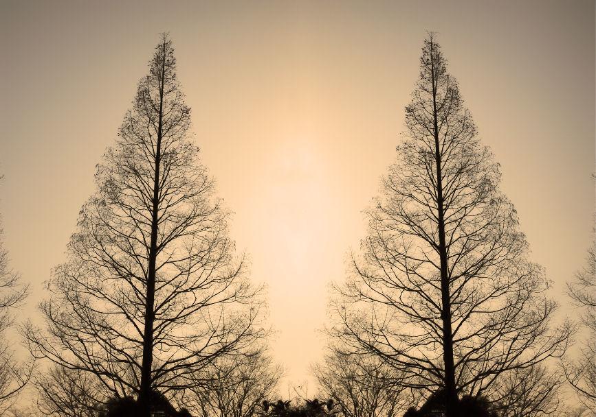 二本の木(合成) 撮影 松田光司