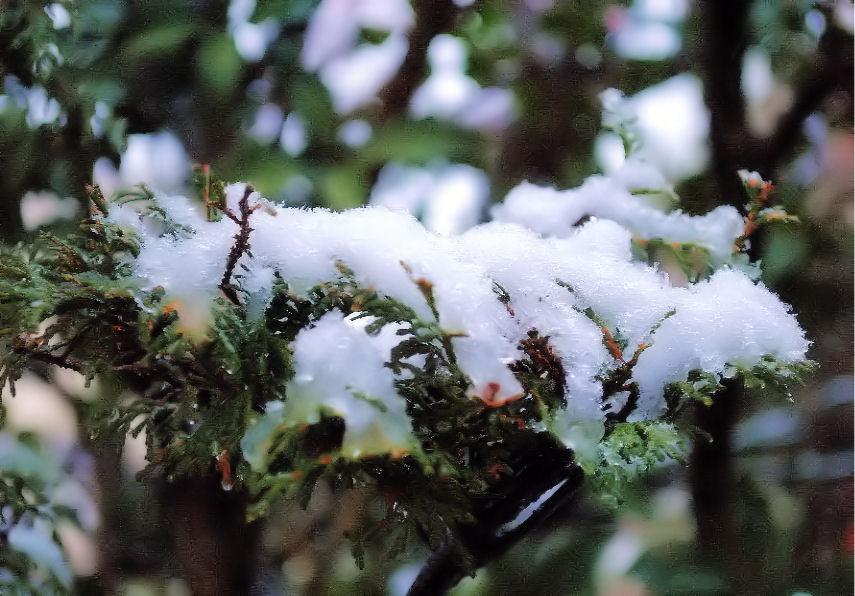 今日の雪 撮影 松田光司