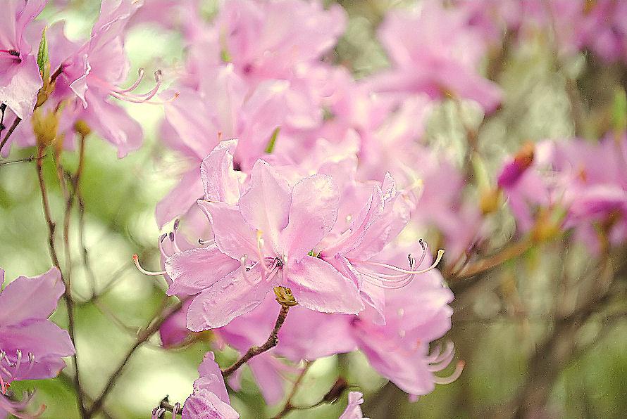 春に咲く花 撮影 松田光司
