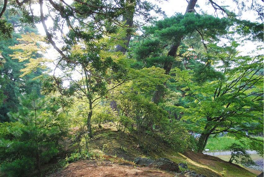 毛越寺の木々 撮影 松田光司