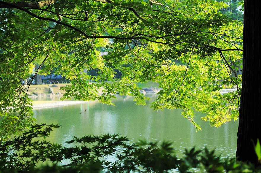 毛越寺の池 撮影 松田光司