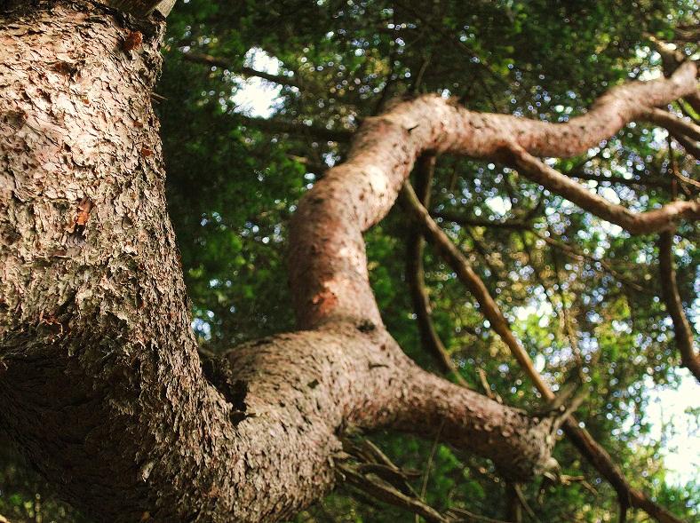 厳美渓で見かけた木 撮影 松田光司