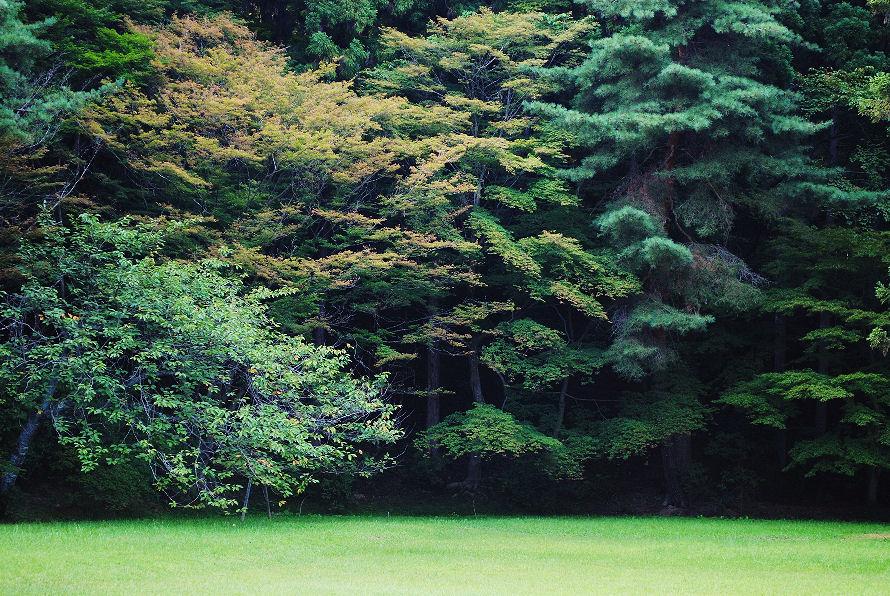 山の木 撮影 松田光司