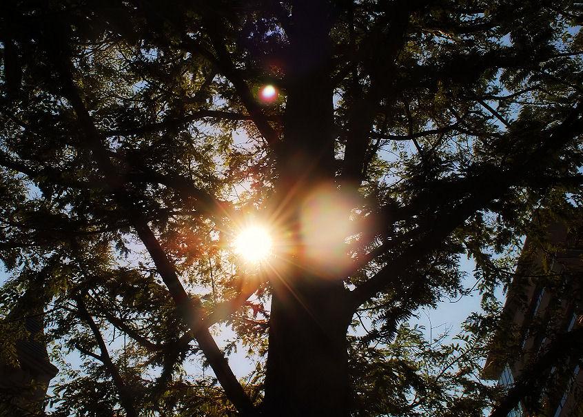 木陰から見える太陽 撮影 松田光司