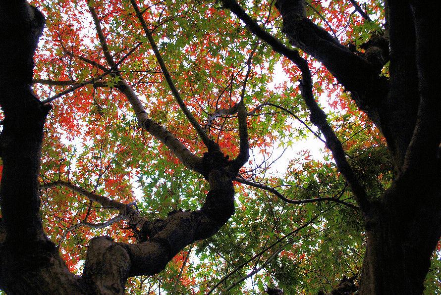 紅い葉と緑の葉 撮影 松田光司