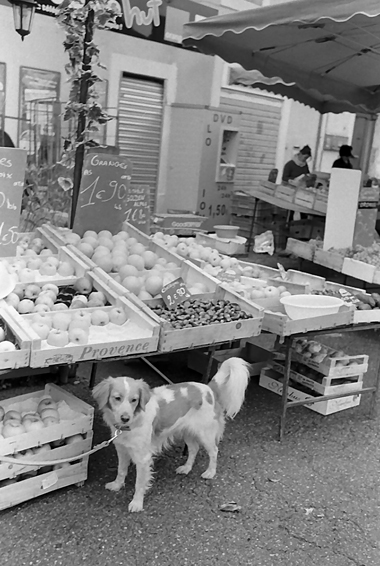 1106dogfruit