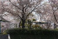 桜が散る頃も好き