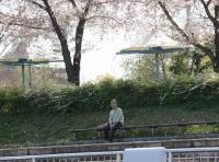 桜吹雪とおばちゃんと