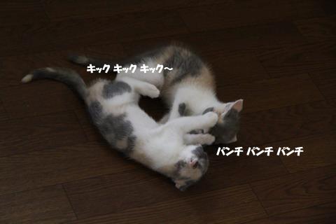 _MG_9649のコピー