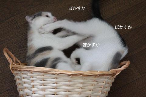 IMG_1005_20110803210837.jpg