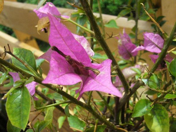 風音ベランダの花