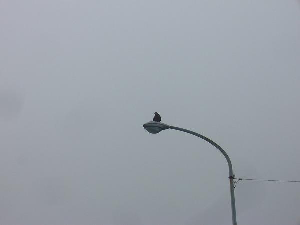 強そうな鳥