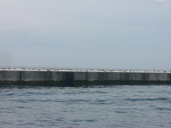 カモメと浮いている防波堤?