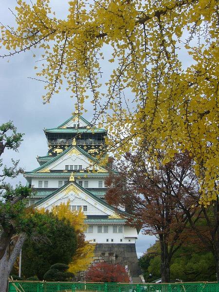 銀杏と大阪城