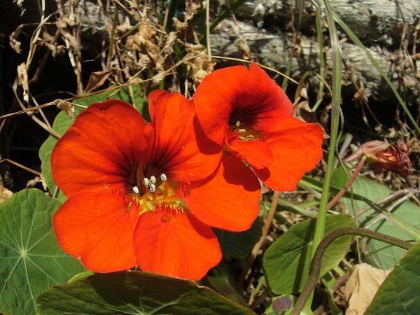 やっぱり初夏の花