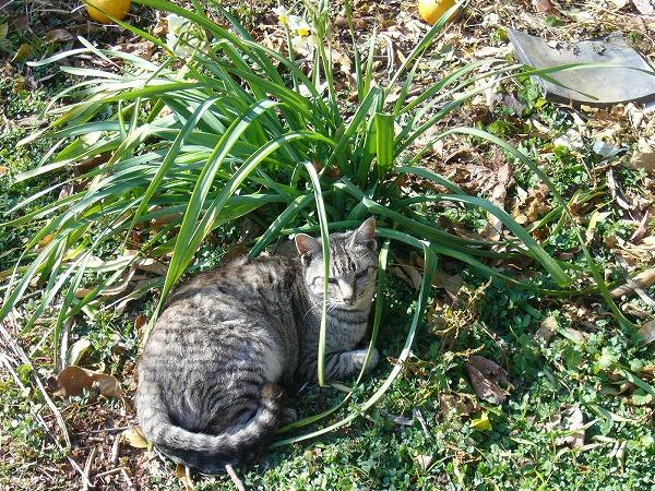 海友荘に遊びに来る猫1月