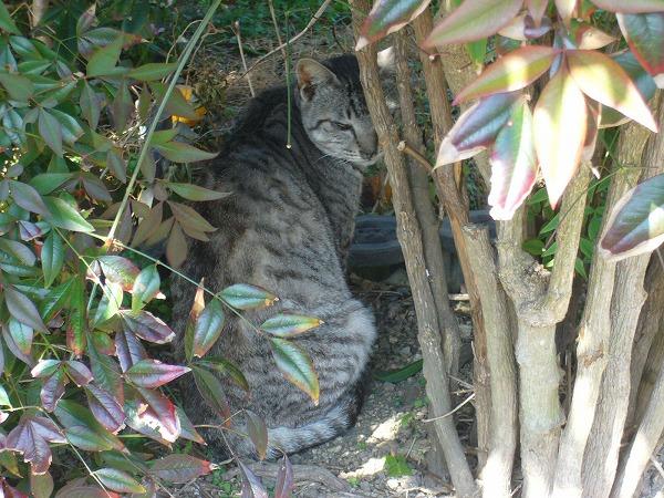 恥ずかしい猫海友荘1月