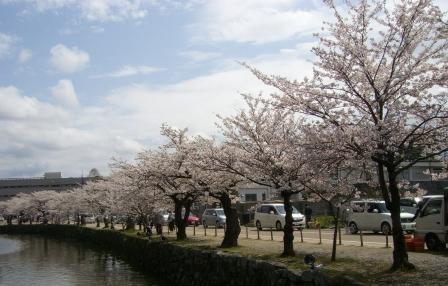 お堀沿い桜2