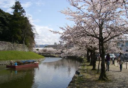 お堀沿い桜