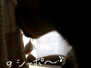 アンジェちゃん2
